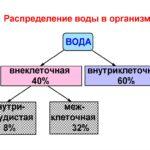 Водно-электролитный обмен