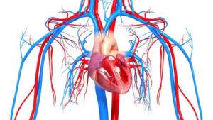 Патологическими изменениями в сердце и сосудах